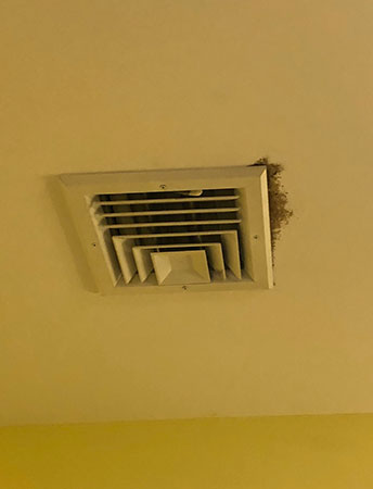 Black mold on ceiling air conditioning vent