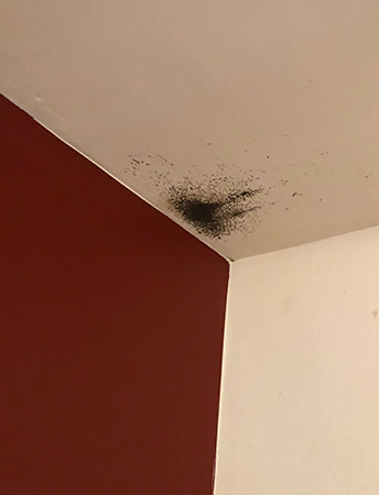 Black mold on bedroom ceiling